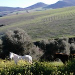 horses at yoga retreat Spain