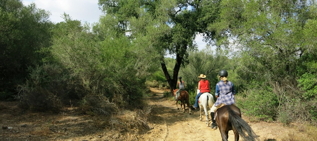 riding cork forest