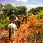 suryalila riding