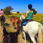 sunflower fields at horse ride spain