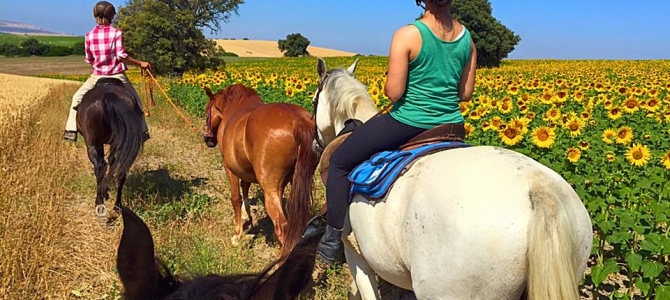 additional horse riding and yoga retreat 1st to 7th july 2017