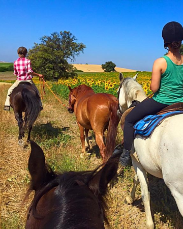 Horse Riding packages