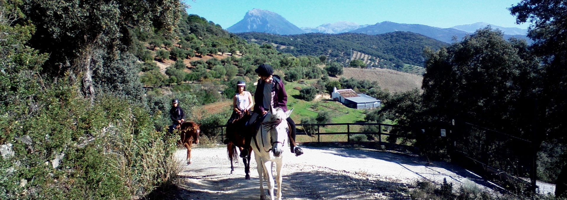 Andalucia Horseriding