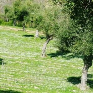 winterlandschaft 5 oliven