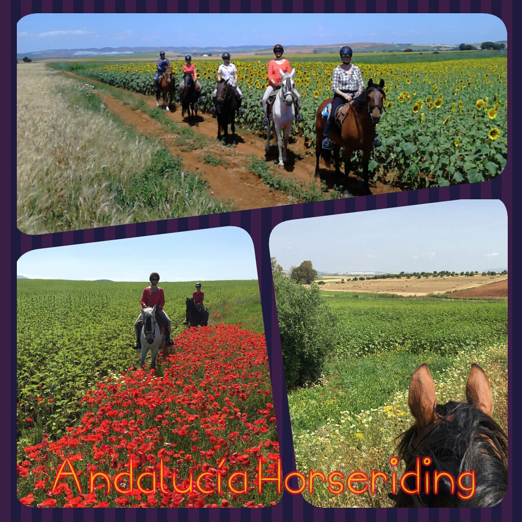 Horse Riding and Yoga Andalucia