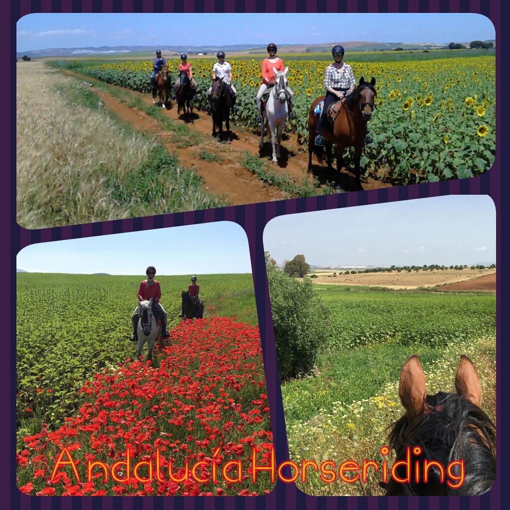 Horse Riding and Yoga Andalucia