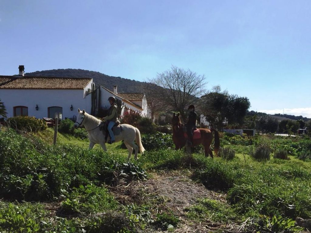 horse riding yoga retreat suryalila