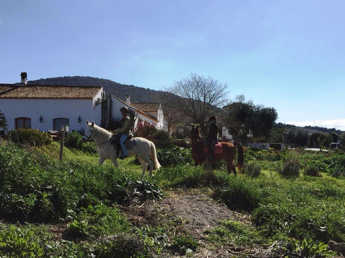 horse riding yoga retreat suryalila